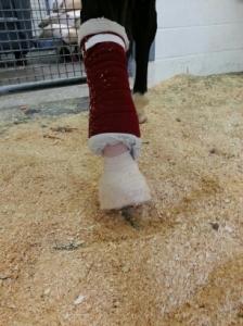 The Aggie Leg.