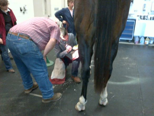 Dr. Marsh kneeling down and working on the hoof-Bruno was an all-star!