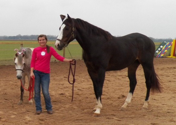 Mimi is a 13 hand Welsh pony.  Bruno is big.