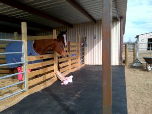 The new mats in front of the stalls for Kid and Bruno.