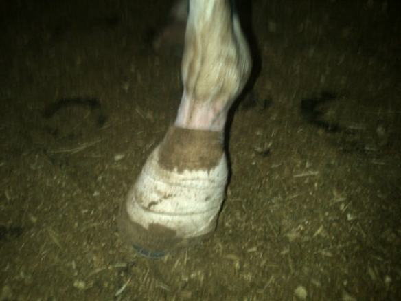Not a good sight.  His leg is white.  The bandage should be white.  But it wasn't.