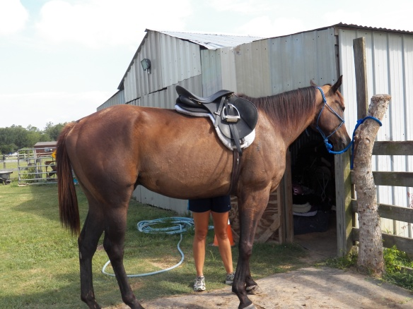 Sarah rescued this OTTB from a life of neglect.  Caroline took over the reins in June.