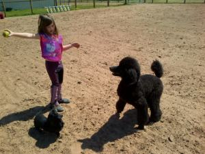 Jordyn waiting her turn to ride and playing ball with the dogs.