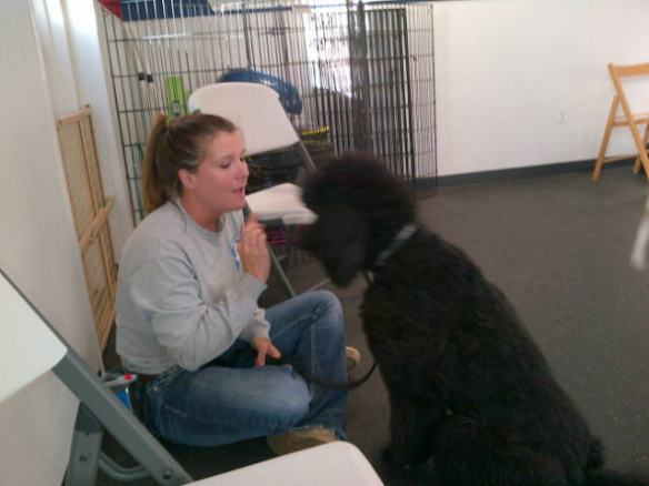 Lauren working with Kona (Watch me!) during obedience class.