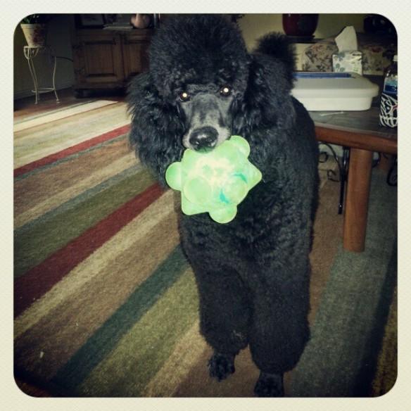 Kona loves to retrieve anything you throw.