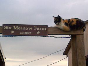 Alice, welcome all to Six Meadow Farm
