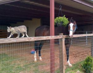 Bruno hanging out while the pasture is mowed with Griffin Kitty.