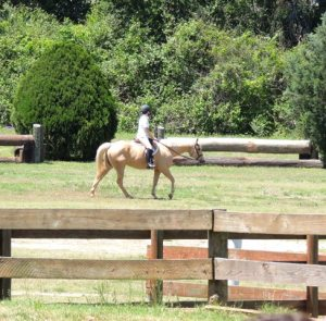 Daisy, once Sabrina, calming walking amongst the eventing jumps at Pine Hill