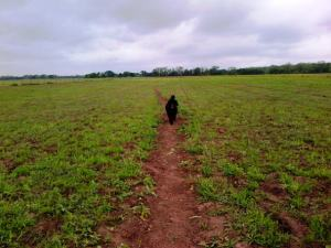 Kona walking the path through the newly mown pasture.