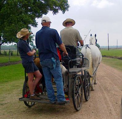 Not your everyday site!  Cart horses from the Morris Ranch and Carriage House schooling today on the back roads of Wharton.
