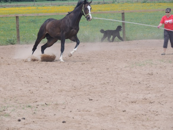 Bruno getting moving!
