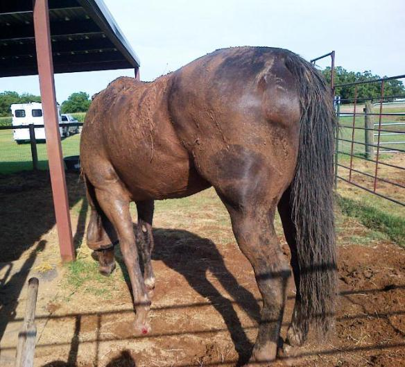 Note the blood seeping through the mud, but I let him coat himself a few more times before I stopped his fun mud time!