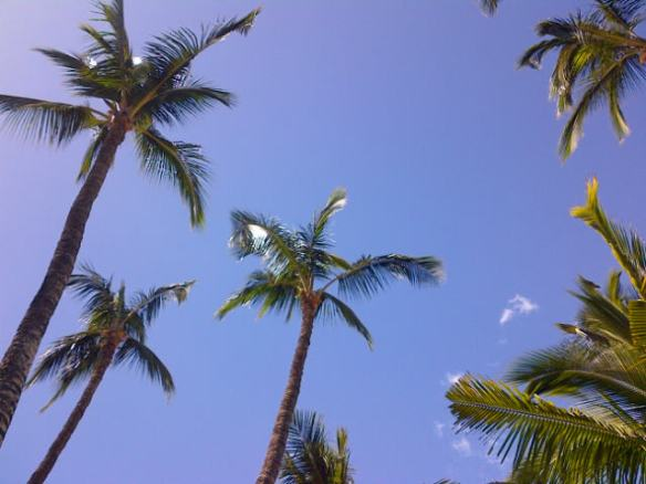 My view from my chaise lounge in Maui.