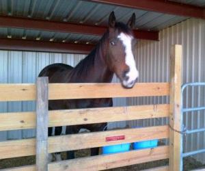 Bruno giving us a sly look after he is safely back in his stall.