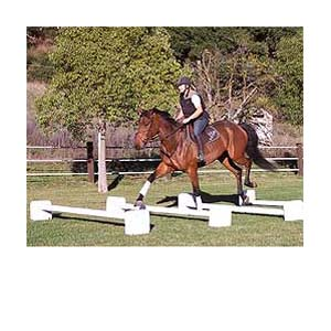 This is a stock picture-NOT BRUNO.  I moved three of the poles together to create one yard wide obstacle.