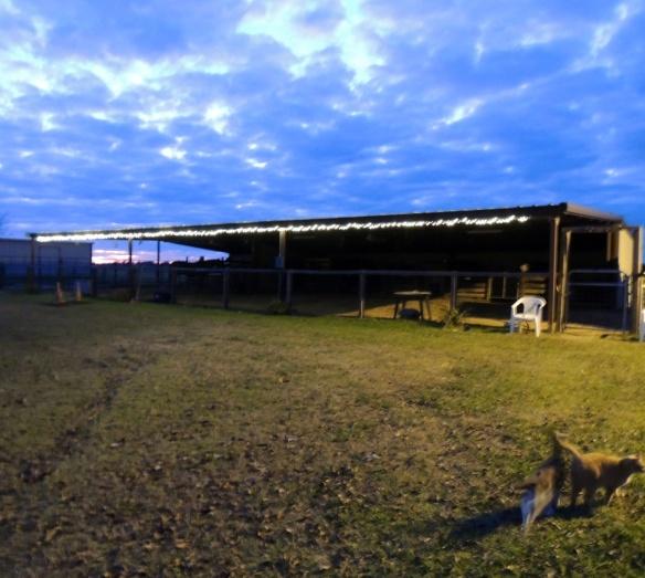 Lauren's Christmas lights adorning the barn.