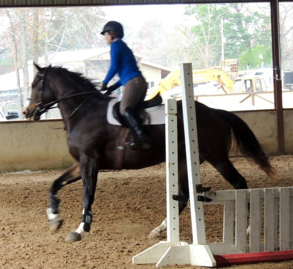 Bruno at the trainer's in December.