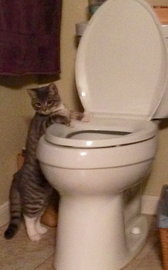 Levi wants to use the toilet like people!