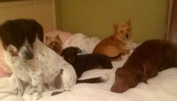 Five dog night in full effect here.