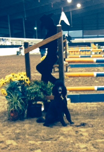 Kona in front of the jump at this weekend's show.