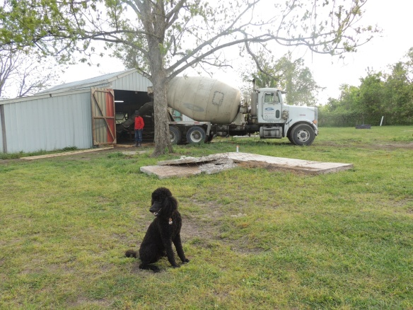 Kona and the concrete truck!