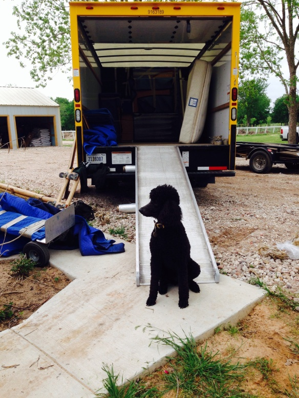 Kona watching out for our precious items as the truck is unloaded.