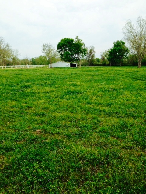 "The green carpet of pasture surrounding our old ""new"" barn."