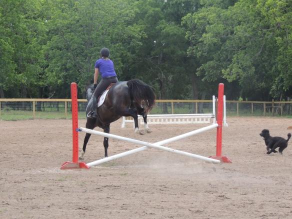 Jump Bruno, jump!