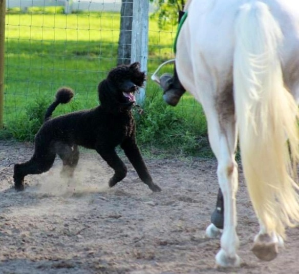 Kona escaping to the arena and giving Mia a little scare. Bad Kona.