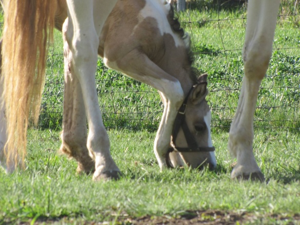 Trying to bend those little knees to get to the fresh spring grass.