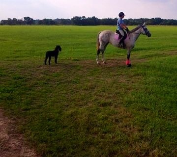 Lauren, Kona and Feather riding the endless meadows of Wharton.