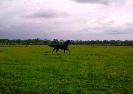 Bruno running free.