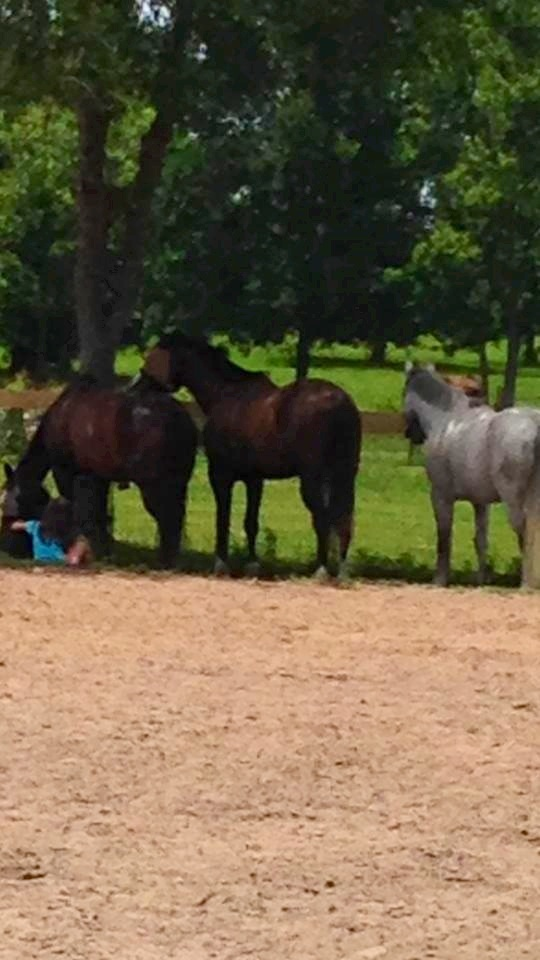 Jordyn and Kona sharing the shade with Feather and the boys.