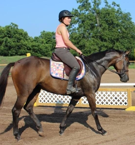 Pretty mare, measuring in just under 16 hands.