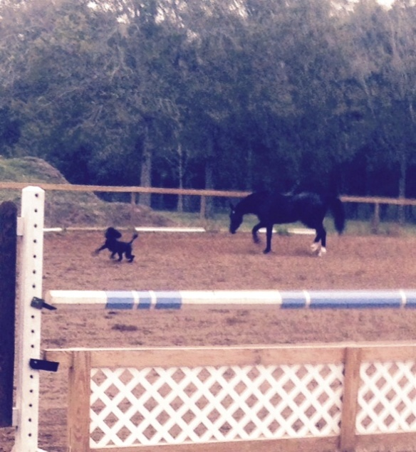 Kona hanging out in the damp arena with Quest.