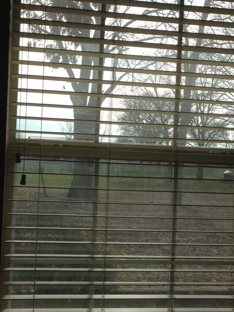 View from my window on this cold day.