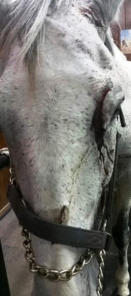 What you don't see-her eyelid had to be sewn back on.