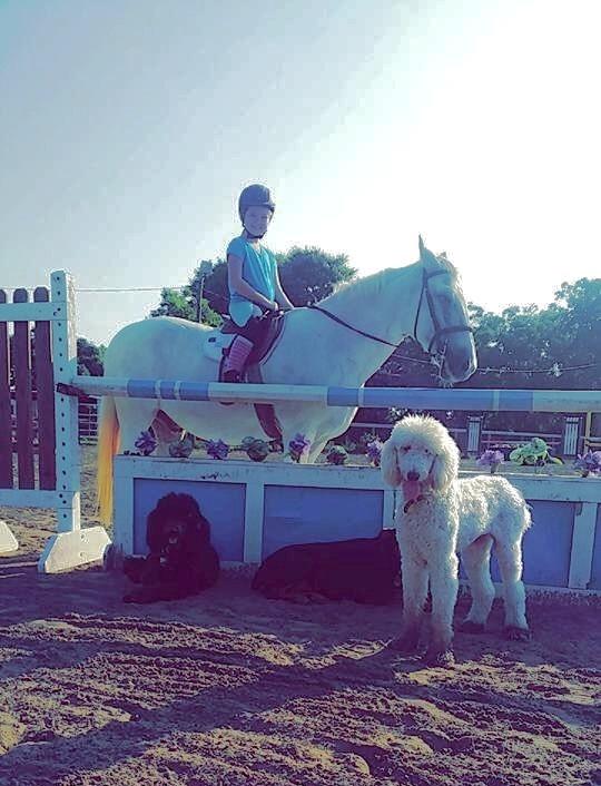 Jo and Snow with Kona, Kena and Maui-barn dogs extornaire!