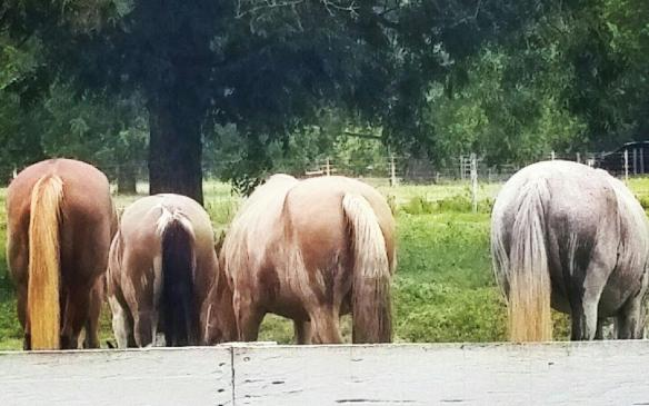 The mares grazing on the late summer grass and subsequently being rained upon.