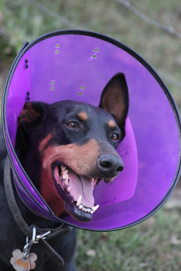 It's all fun and games until someone has to wear the cone!